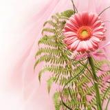 Un fiore dentellare Fotografia Stock