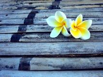Un fiore di due plumerie Immagini Stock Libere da Diritti