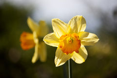 Fiore di primavera nel parco di Stanley Fotografia Stock Libera da Diritti