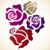Un fiore di quattro colori Fotografia Stock