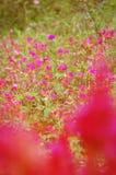 Un fiore di quattro in punto Immagini Stock