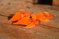 Un fiore di tre arance fotografia stock libera da diritti
