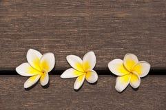 Un fiore di tre plumerie sul pavimento di legno Fotografie Stock Libere da Diritti