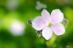 Un fiore fra la brezza di estate Immagine Stock