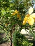 un fiore giallo Immagini Stock Libere da Diritti