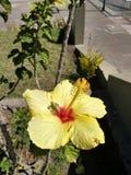 un fiore giallo Fotografia Stock Libera da Diritti