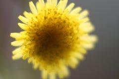 Un fiore giallo capovolto fotografie stock