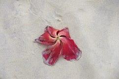 Un fiore guasto sulla spiaggia Fotografia Stock Libera da Diritti