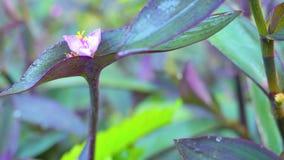 Un fiore insolito nel giardino archivi video