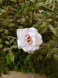 Un fiore in mezzo alla terra Immagini Stock