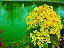 Un fiore piacevole Fotografia Stock