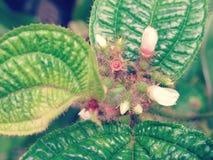 Un fiore protetto fotografia stock libera da diritti