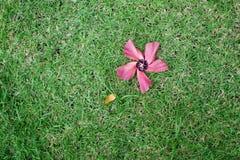 Un fiore rosa sull'erba Immagine Stock