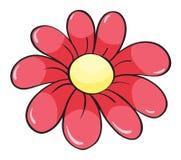 Un fiore rosso Fotografie Stock Libere da Diritti