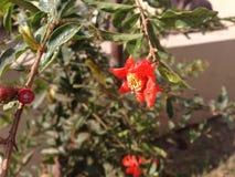 Un fiore rosso Fotografie Stock