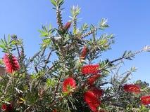un fiore rosso esotico immagini stock