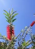 un fiore rosso esotico immagine stock libera da diritti