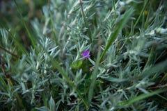 Un fiore solo minuscolo Fotografia Stock