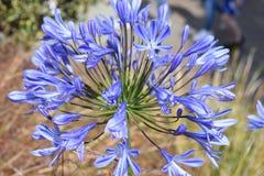 un fiore stupefacente colouful Fotografie Stock
