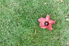 Un fiore sull'erba Fotografie Stock Libere da Diritti