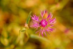 Un fiore umile Fotografie Stock