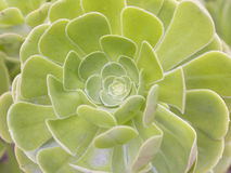Un fiore verde Fotografia Stock