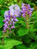 Un fiore viola Fotografie Stock