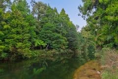 Un fiume che passa foresta indigena densa in Nuova Zelanda fotografie stock