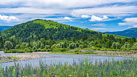 Un fiume della montagna al piede della collina con gli alberi verdi Fotografie Stock Libere da Diritti