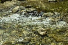 Un fiume della montagna nella foresta fotografie stock