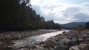 Un fiume nel legno in un giorno soleggiato Fotografia Stock Libera da Diritti