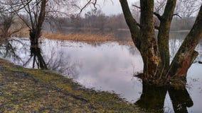 Un fiume per la pesca in natura Fotografie Stock