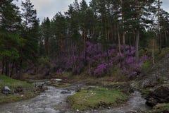 Un fiume veloce scorre fra le montagne con erba Fotografie Stock