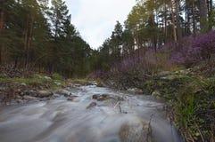 Un fiume veloce scorre in mezzo coperto di erba Fotografia Stock Libera da Diritti