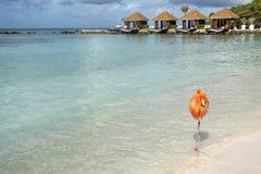 Un flamant rose sauvage sur une plage des Caraïbes avec des cabanes à l'arrière-plan #2 photo libre de droits