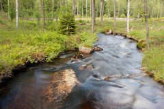 Un fleuve dans les bois suédois Photographie stock libre de droits