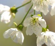Un flor fotos de archivo libres de regalías