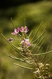 Un flor en el campo Fotografía de archivo libre de regalías