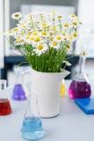 Un florero grande con las margaritas en el laboratorio qu?mico, frascos con los l?quidos coloreados que se colocan en la tabla fotografía de archivo libre de regalías