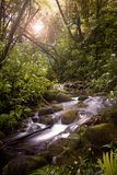 Un flot dans la forêt humide Photos stock