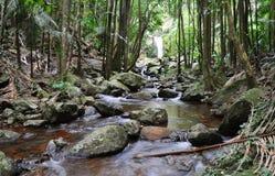 Un flot traverse une forêt humide avec la cascade à écriture ligne par ligne Image stock