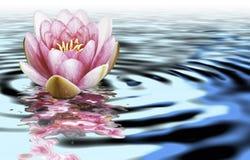 Un flwer del loto su acqua Immagine Stock