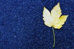 Un foglio giallo sull'asfalto Immagini Stock Libere da Diritti