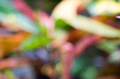 Un follaje abstracto colorido del fondo fotografía de archivo libre de regalías