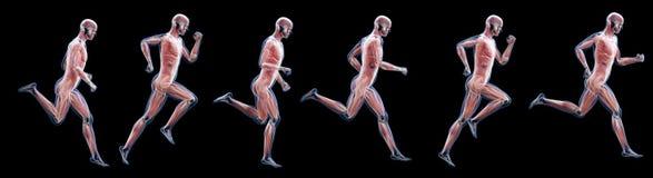 Un fonctionnement équipe des muscles illustration stock