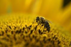 Un fonctionnement d'abeille Photos libres de droits