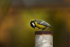 Un fond animal de bébé de petit oiseau Image libre de droits