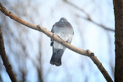Un fond animal de bébé de petit oiseau Photographie stock