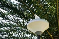 Un fond avec un blanc a plongé se reposant sur une lanterne blanche photographie stock libre de droits