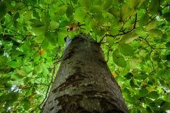 Un fond complètement de vert part avec le tronc d'arbre brouillé dans le premier plan Images stock